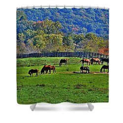 Rescue Horses Shower Curtain