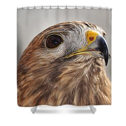Rescued Hawk Shower Curtain