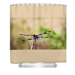 Shower Curtain featuring the photograph Rest Area, Dragonfly On A Branch by Shelli Fitzpatrick
