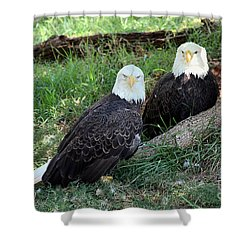 Shower Curtain featuring the photograph Resting Bald Eagles by Sheila Brown