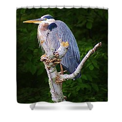Resting Blue Heron Shower Curtain by Bruce Bley