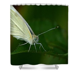 Shower Curtain featuring the photograph Resting by Cathy Harper