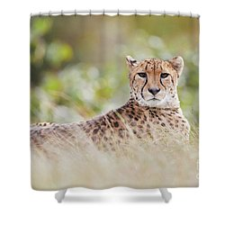 Shower Curtain featuring the photograph Resting Cheetah by Nick Biemans