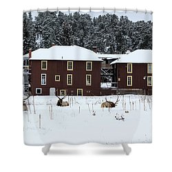 Resting Elk - 9131 Shower Curtain