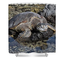 Shower Curtain featuring the photograph Resting My Head by Pamela Walton