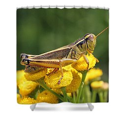 Resting On Sunshine Shower Curtain by Doris Potter