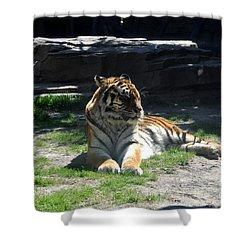 Shower Curtain featuring the photograph Resting Tiger by John Black