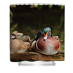 Resting Wood Ducks Shower Curtain