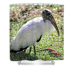 Resting Wood Stork Shower Curtain