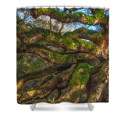 Resurrection Fern Dons Angel Oak Shower Curtain