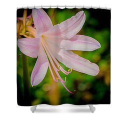 Resurrection Lily Or Magic Lily Shower Curtain