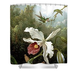 Retouched Masters - Orchid And Hummingbirds In Tropical Forest Shower Curtain