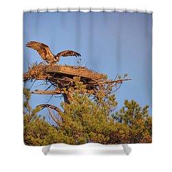 Returning To The Nest Shower Curtain by Rick Berk