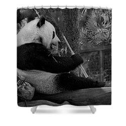 Revel In Bamboo Shower Curtain