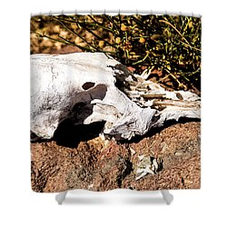 Shower Curtain featuring the photograph Reversal Of Fortune by Onyonet  Photo Studios