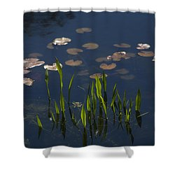 Revival Shower Curtain by Morris  McClung