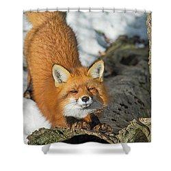 Shower Curtain featuring the photograph Reynard The Fox by Nina Stavlund