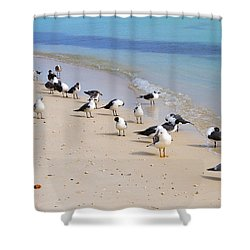 Rhapsody In Seabird Shower Curtain