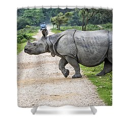 Rhino Crossing Shower Curtain by Pravine Chester