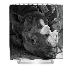 Rhino Nap Shower Curtain