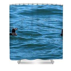 Rhinoceros Auklet Shower Curtain by Linda Kerkau