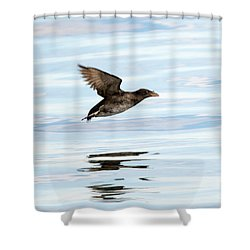 Rhinoceros Auklet Reflection Shower Curtain by Mike Dawson
