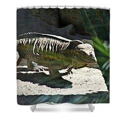 Shower Curtain featuring the photograph Rhinoceros Iguana by Miroslava Jurcik