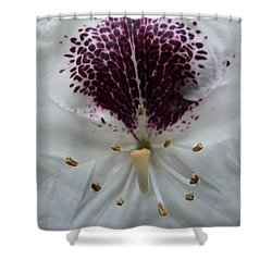 Rhododendron 2 Shower Curtain by Jean Bernard Roussilhe