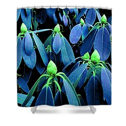 Rhododendron Buds In Spring Shower Curtain