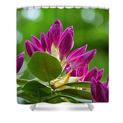Rhododendron Buds Shower Curtain by MTBobbins Photography