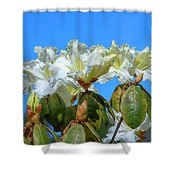 Rhododendron Ciliicalyx Dthn0213 Shower Curtain