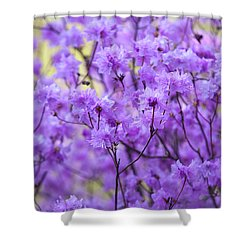 Shower Curtain featuring the photograph Rhododendron In Bloom. Spring Watercolors by Jenny Rainbow