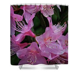 Rhododendron In The Pink Shower Curtain by Laddie Halupa