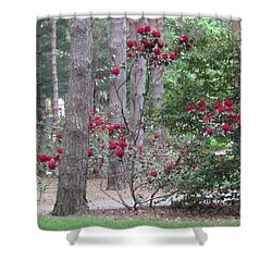 Rhododendrons In Lorain County Shower Curtain by Kathie Chicoine