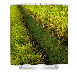 Shower Curtain featuring the photograph Rice Field Hiking by T Brian Jones