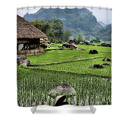 Rice Fields Shower Curtain by Chuck Kuhn
