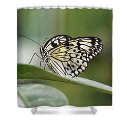 Shower Curtain featuring the photograph Rice Paper Butterfly - 2 by Paul Gulliver