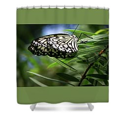 Rice Paper Butterfly - Shower Curtain