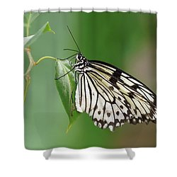 Shower Curtain featuring the photograph Rice Paper Butterfly by Paul Gulliver