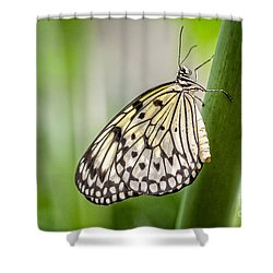 Rice Paper Shower Curtain