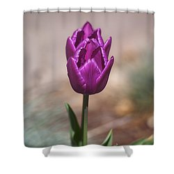 Rich Beauty Shower Curtain by Morris  McClung