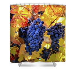 Rich Fall Colors With Grapes Shower Curtain