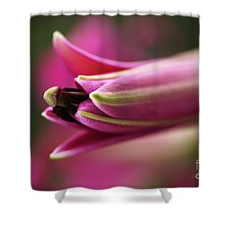 Rich Pink Lily Bud Shower Curtain by Joy Watson