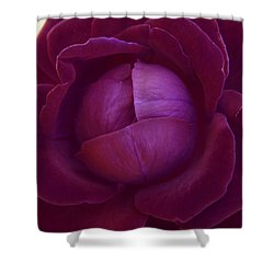 Rich Purple Lettuce Rose Shower Curtain