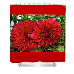 Shower Curtain featuring the photograph Rich Red Dahlias By Kaye Menner by Kaye Menner