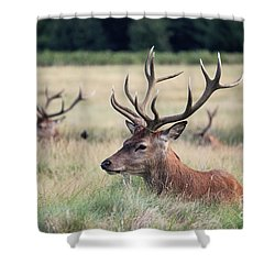 Richmond Park Stags Shower Curtain