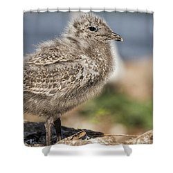 Shower Curtain featuring the photograph Ring-billed Gull Chick 2016-1 by Thomas Young