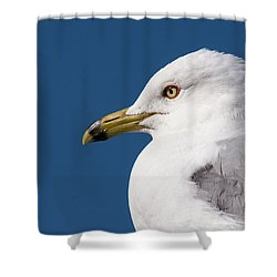 Ring-billed Gull Portrait Shower Curtain