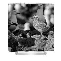 Shower Curtain featuring the photograph Ring-billed Gulls 2016-1 by Thomas Young