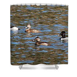 Ring Neck Ducks 20120314_d Shower Curtain